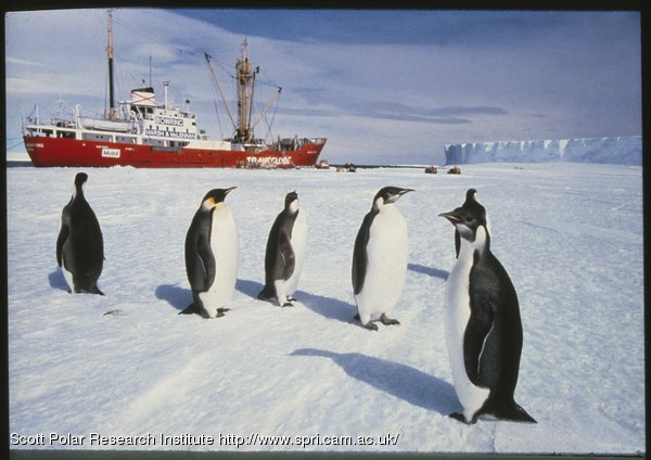 photograph of penguins, P2007/16/83