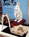 Photo: Alice's rabbit [image courtesy of Oxford University Natural History Museum]
